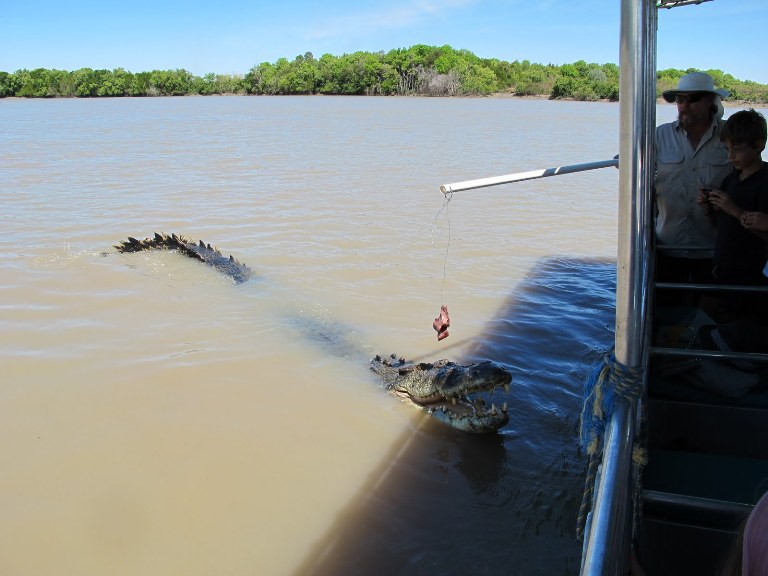 jumping crocodiles adelaide river